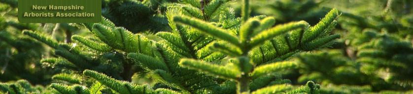 NH Arborists Association
